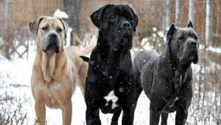 Postino Ucciso Da Cani Da Guardia Stava Consegnando Plico Leco